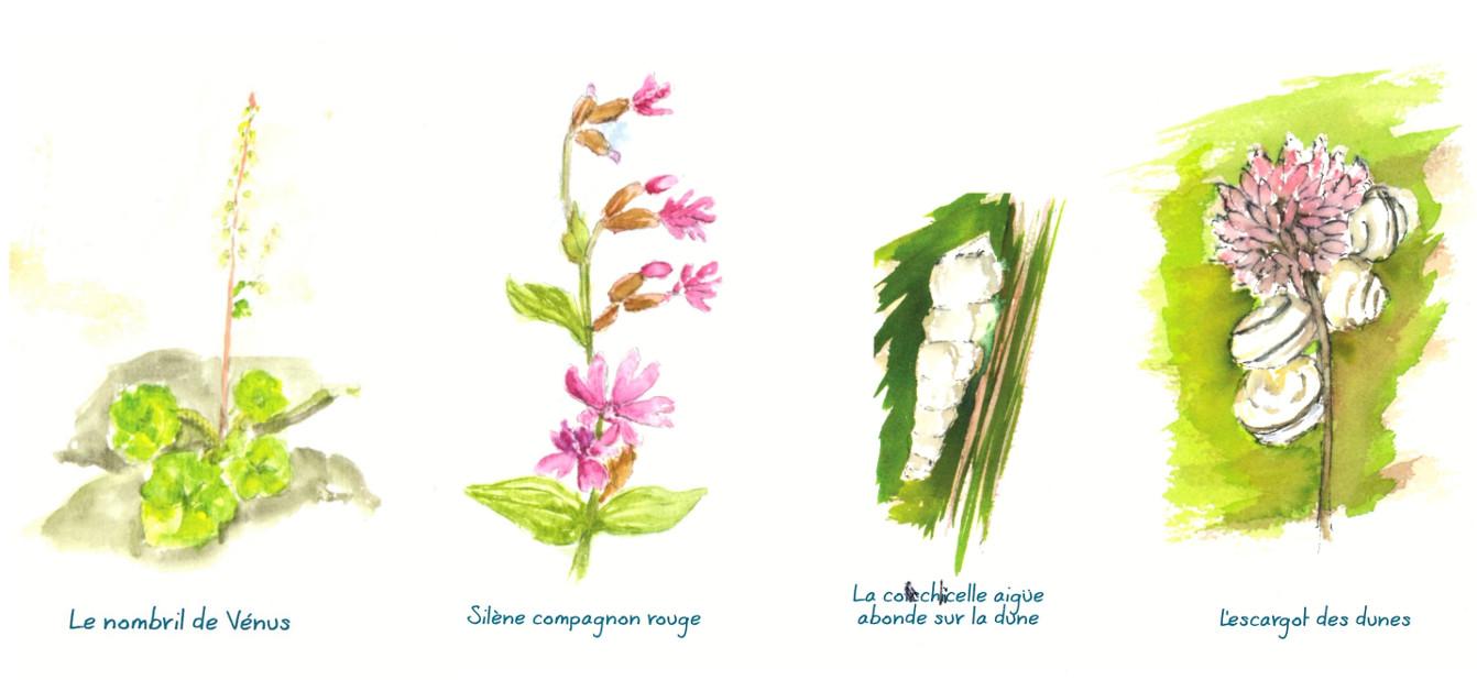 plantes sieck